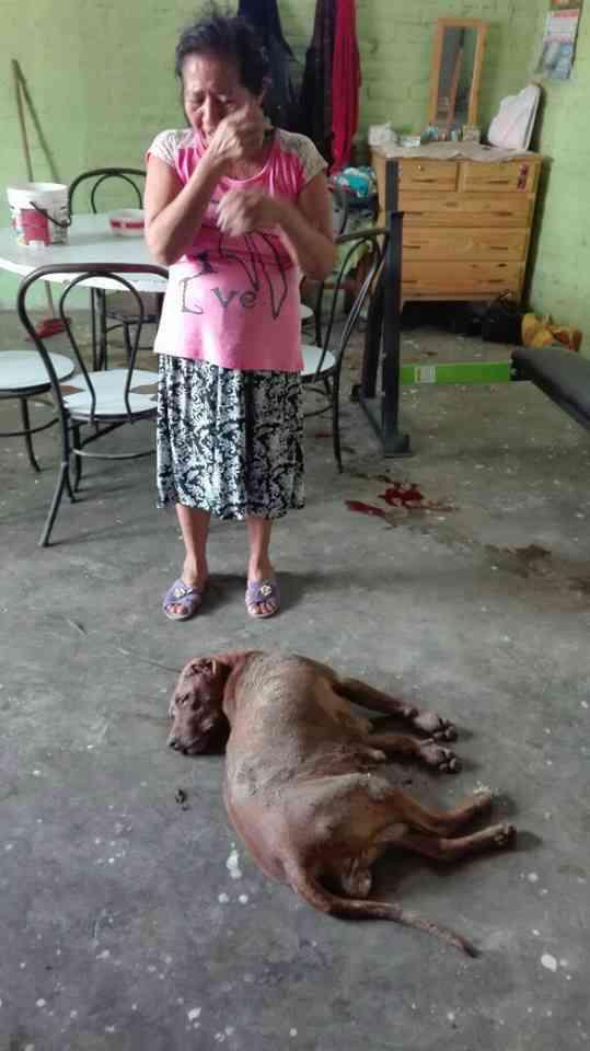 policia-mata-perro-por-equivocacion